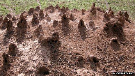 Ant Animal engineers Turrets